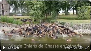 vénerie Chiens - 5